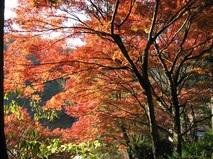 マリアージュ浜松のカップルに聞きました!紅葉デート1位は香嵐渓。