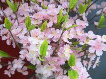 春ですね♪浜松の桜の開花は3月20日予想です!