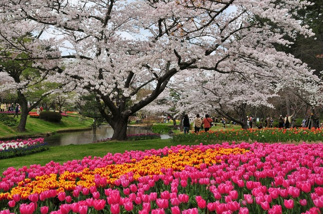 浜松 デート 桜